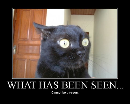 Meme showing a frightened cat with the caption 'what has been seen cannot be unseen'